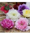 Fleurs artificielles pivoine réaliste 12 cm Fuchsia